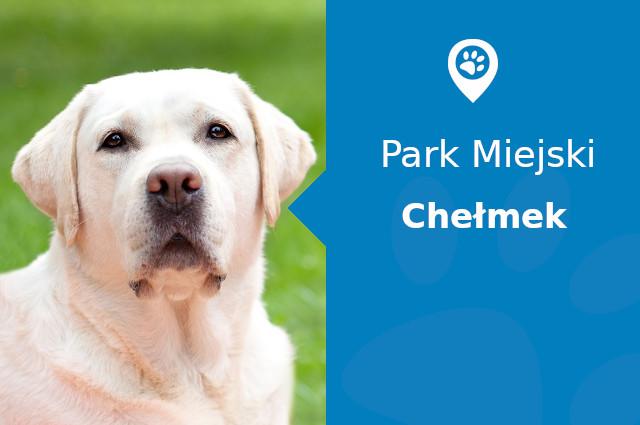 labrador-chelmek-park-miejski