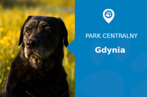 Labrador w Gdyni. Odwiedź Park Centralny