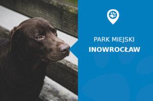 Labrador w Nowy Parku Solankowym Inowrocław