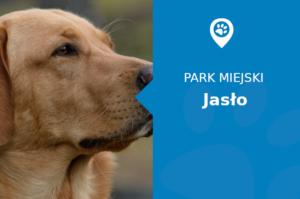 Labrador w Park Miejski Jasło