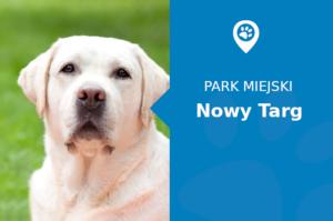 Labrador w Park Miejski im. Adama Mickiewicza Nowy Targ