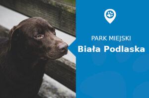Labrador w Park Zofii Las Biała Podlaska
