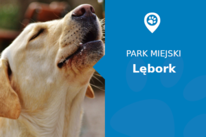 Labrador w Park im. Bolesława Chrobrego Lębork
