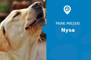 Labrador w Park miejski Nysa