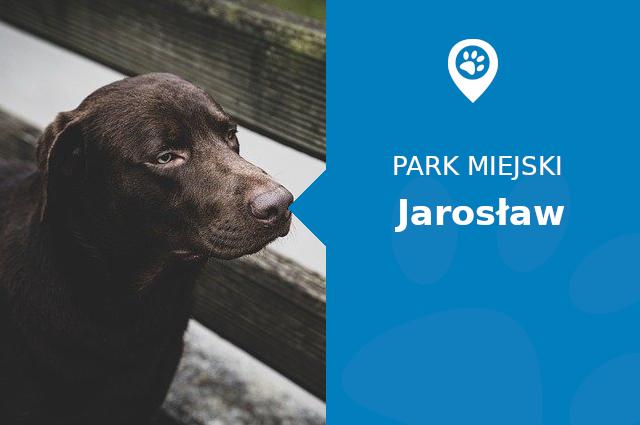 Labrador w Park miejski im. Bohaterów Monte Cassino Jarosław