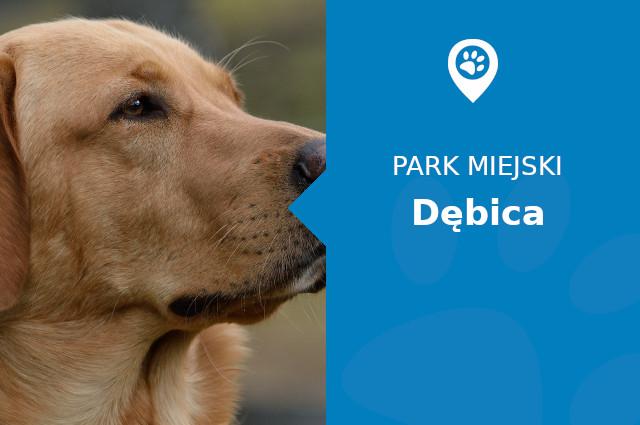Labrador w Parku Imienia Włodzimierza Skarbka-Borowskiego Dębica