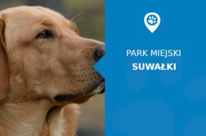 Labrador w Parku Konstytucji 3 Maja Suwałki