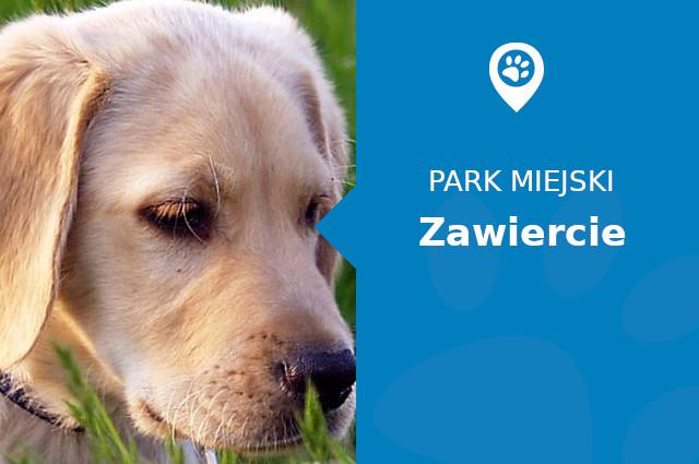 Labrador w Parku Kościuszki Zawiercie