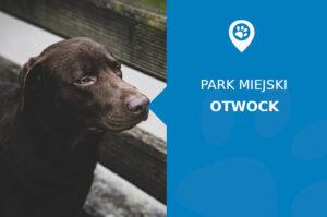 Labrador w Parku Miejskim Otwock