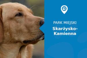 Labrador w Parku Miejskim Skarżysko-Kamienna