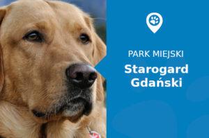 Labrador w Parku Miejskim Starogard Gdański