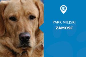 Labrador w Parku Miejskim Zamość