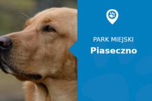 Labrador w Parku Miejskim im. Książąt Mazowieckich Piaseczno