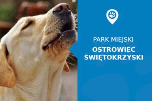 Labrador w Parku Miejskim im. Marszałka Józefa Piłsudskiego Ostrowiec Świętokrzyski