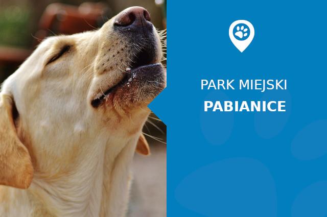 Labrador w Parku Wolności Pabianice