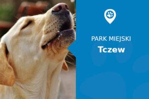 Labrador w Parku im. Mikołaja Kopernika Tczew