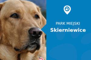 Labrador w Parku miejskim Skierniewice