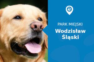 Labrador w Parku miejskim Wodzisław Śląski