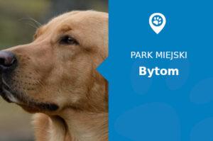 Pies labrador bytom park miejski
