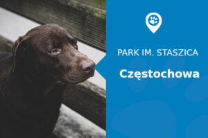 labrador-czestochowa-park-staszica