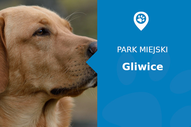 labrador gliwice park miejski