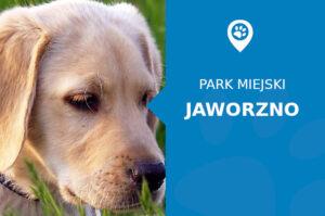 labrador jaworzno park miejski