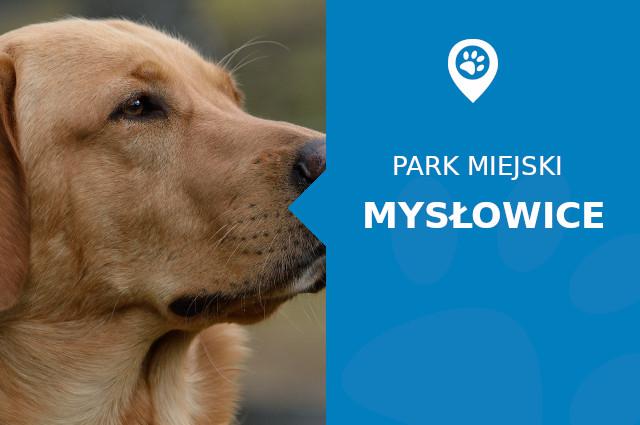 labrador mysłowice park miejski