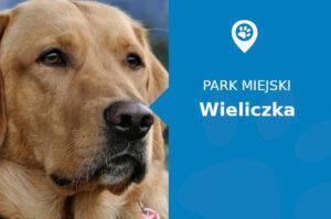 Labrador w Parku Adama Mickiewicza Wieliczka