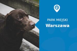 Labrador w Parku Agrykola Warszawa