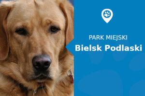 Labrador w Parku Aleksandra Jagielończyka Bielsk Podlaski