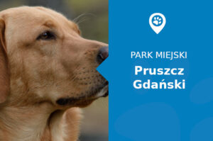 Labrador w Parku Centralnym Pruszcz Gdański