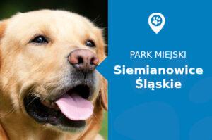 Labrador w Parku Górnik Siemianowice Śląskie