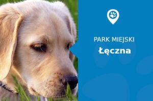 Labrador w Parku III tysiąclecia Łęczna