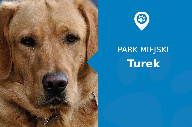 Labrador w Parku im. Konstytucji 3 Maja Turek