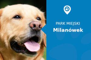 Labrador w Parku im. M. Lasockiego Milanówek