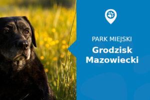 Labrador w Parku im. Skarbków Grodzisk Mazowiecki