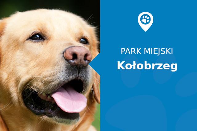Labrador w Parku im. Stefana Żeromskiego Kołobrzeg