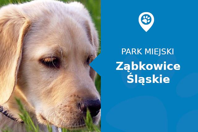 Labrador w Parku im. Sybiraków Ząbkowice Śląskie
