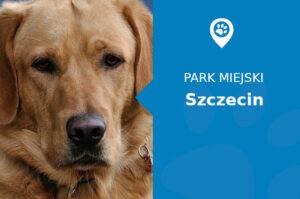 Labrador w Parku Kasprowicza Szczecin