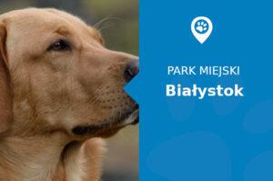 Labrador w Parku Konstytucji 3 Maja Białystok