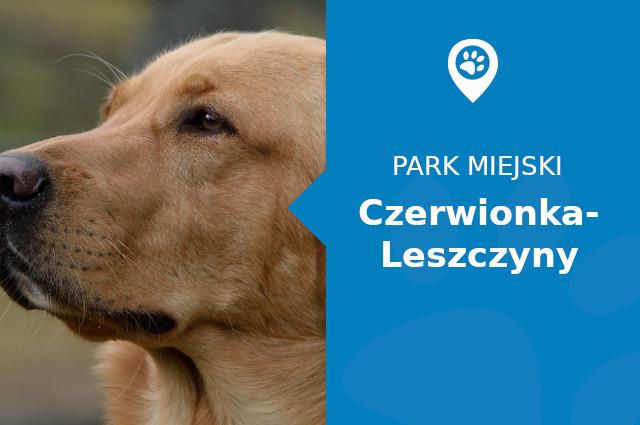 Labrador w Parku Leśnym Czerwionka-Leszczyny