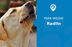 Labrador w Parku Leśnym im. Powstańców Śląskich Radlin