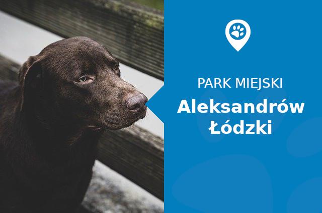Labrador w Parku Miejskim Aleksandrów Łódzki