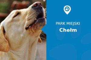 Labrador w Parku Miejskim Chełm