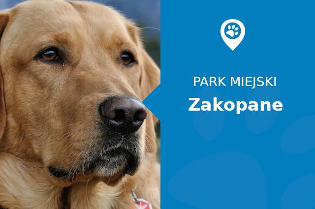 Labrador w Parku Miejskim Imienia Marszałka Józefa Piłsudskiego Zakopane
