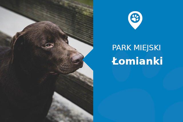 Labrador w Parku Miejskim Łomianki