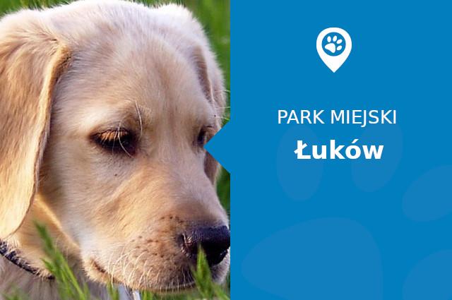 Labrador w Parku Miejskim Łuków