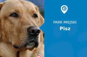 Labrador w Parku Miejskim Pisz