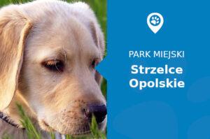 Labrador w Parku Miejskim Strzelce Opolskie