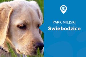 Labrador w Parku Miejskim Świebodzice